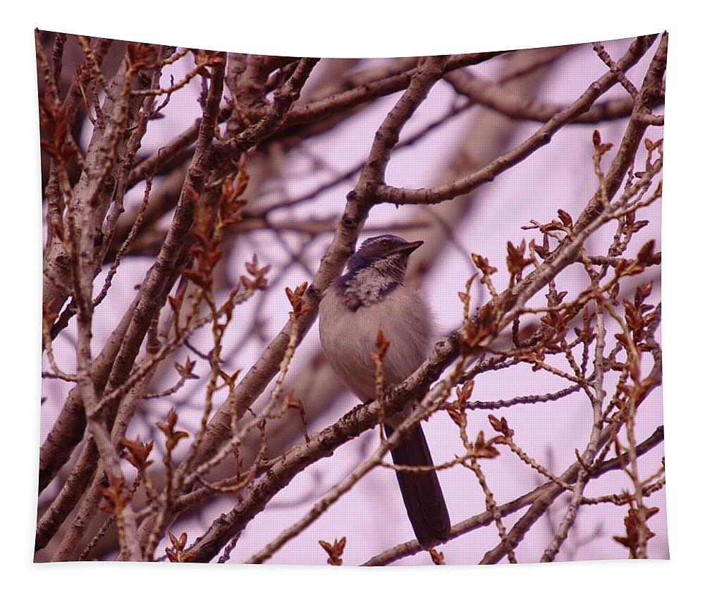 Birds Tapestry featuring the photograph Western Scrub-jay by Jeff Swan