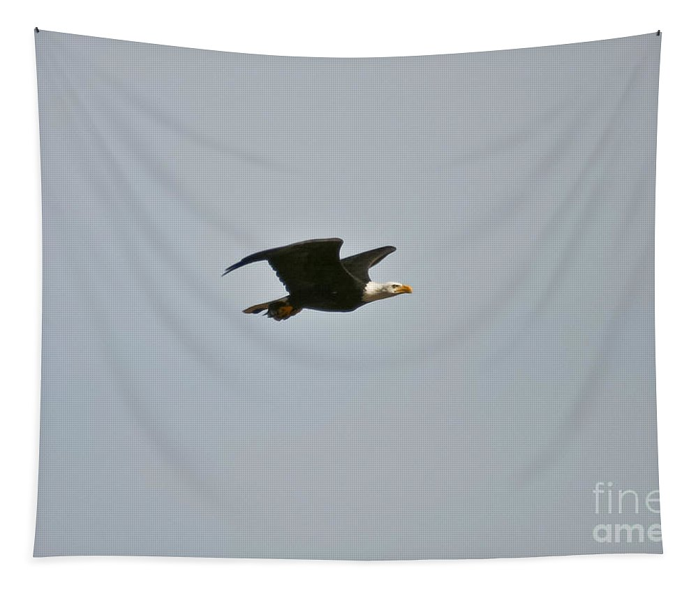 Bald Eagle Tapestry featuring the photograph Special Delivery by Mitch Shindelbower