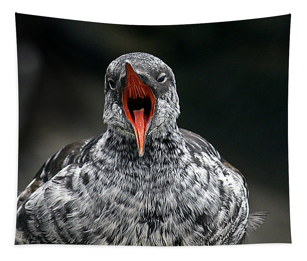 Bird Tapestry featuring the photograph Squawk by Jean Noren