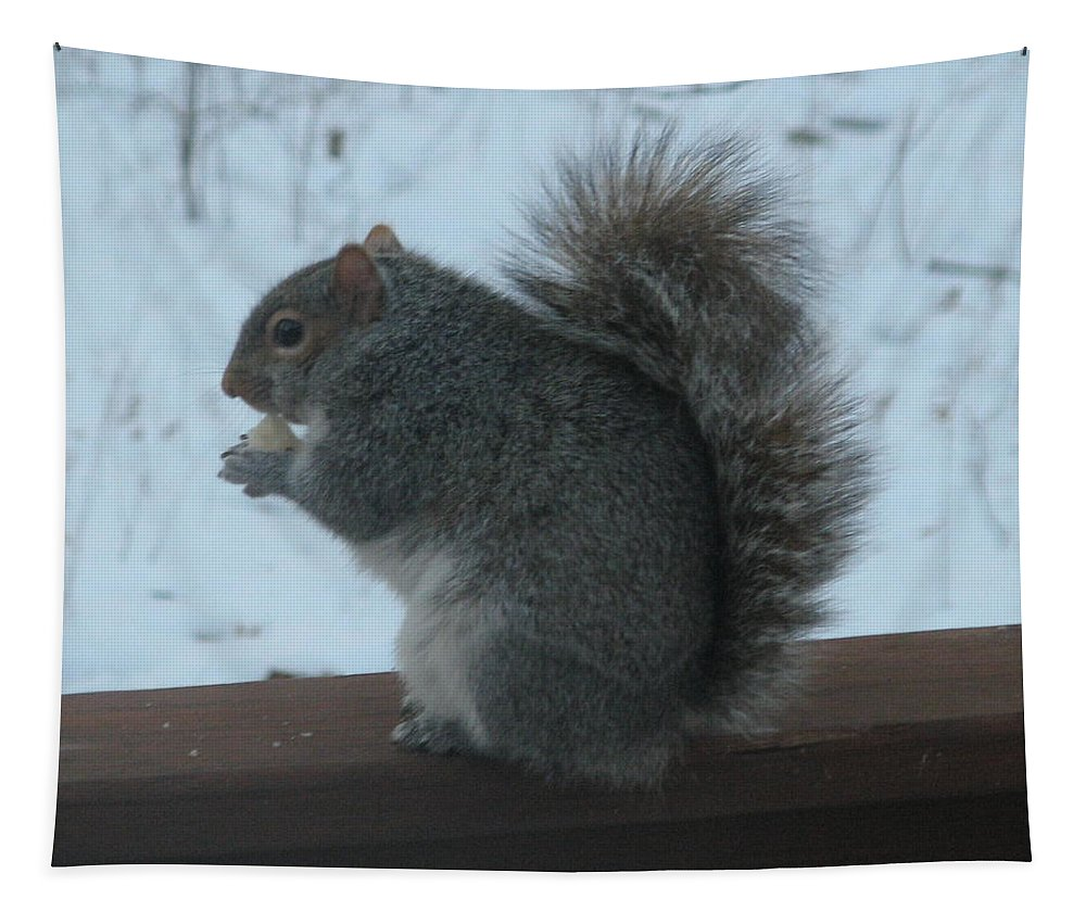 Squirrel Tapestry featuring the photograph Squirrel Snack by Richard Bryce and Family