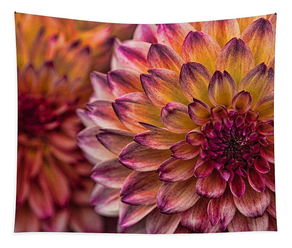 Stacked Dahlias Tapestry featuring the photograph Stacked Dahlias by Wes and Dotty Weber