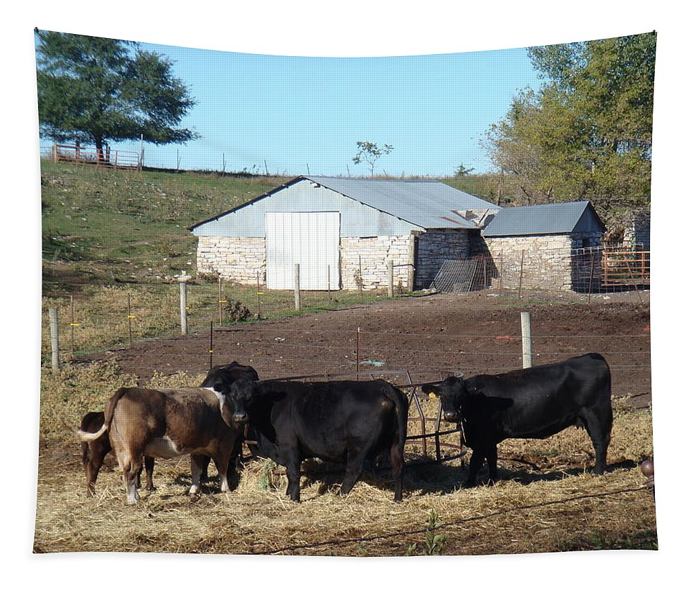 Cows Tapestry featuring the photograph Steers by Bonfire Photography