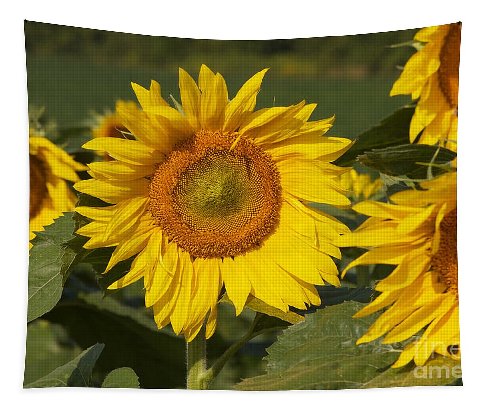 Sun Flower Tapestry featuring the photograph Sun Flower by William Norton