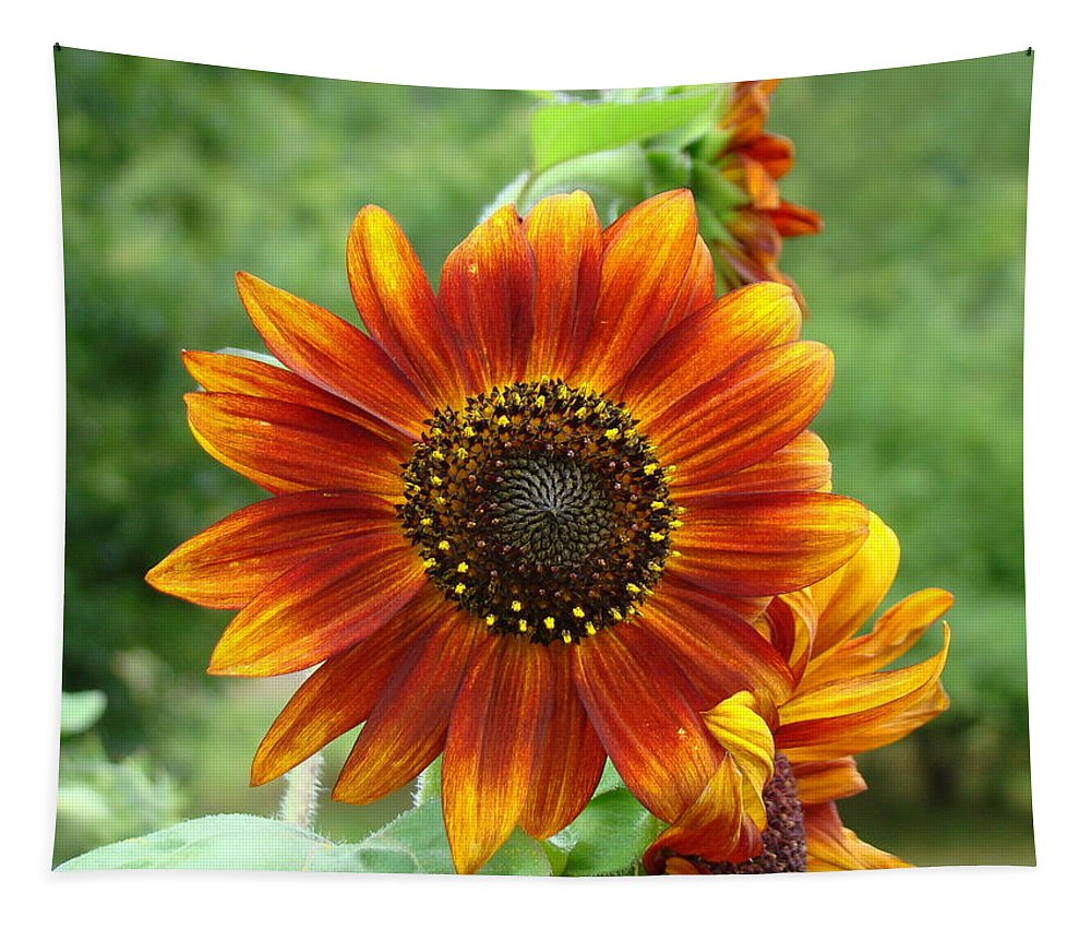 Red Sunflower Tapestry featuring the photograph Sunflower by Lisa Rose Musselwhite
