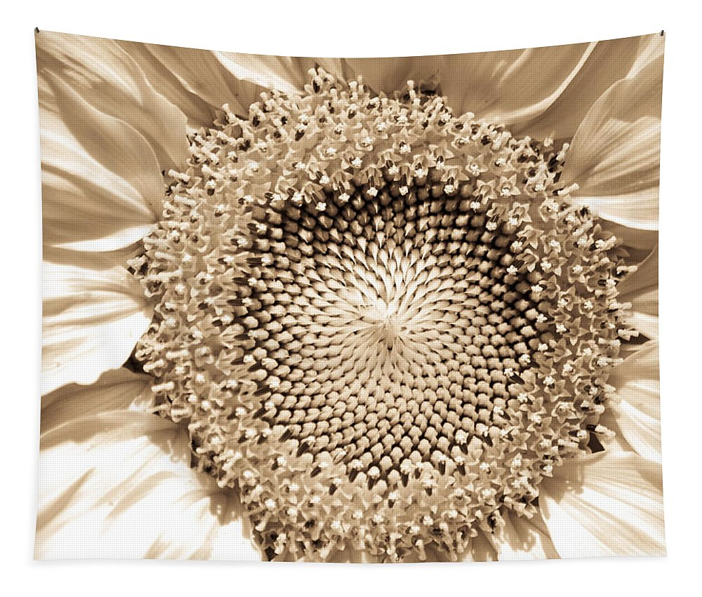 Sunflower Tapestry featuring the photograph Sunflower Seeds by Trish Tritz