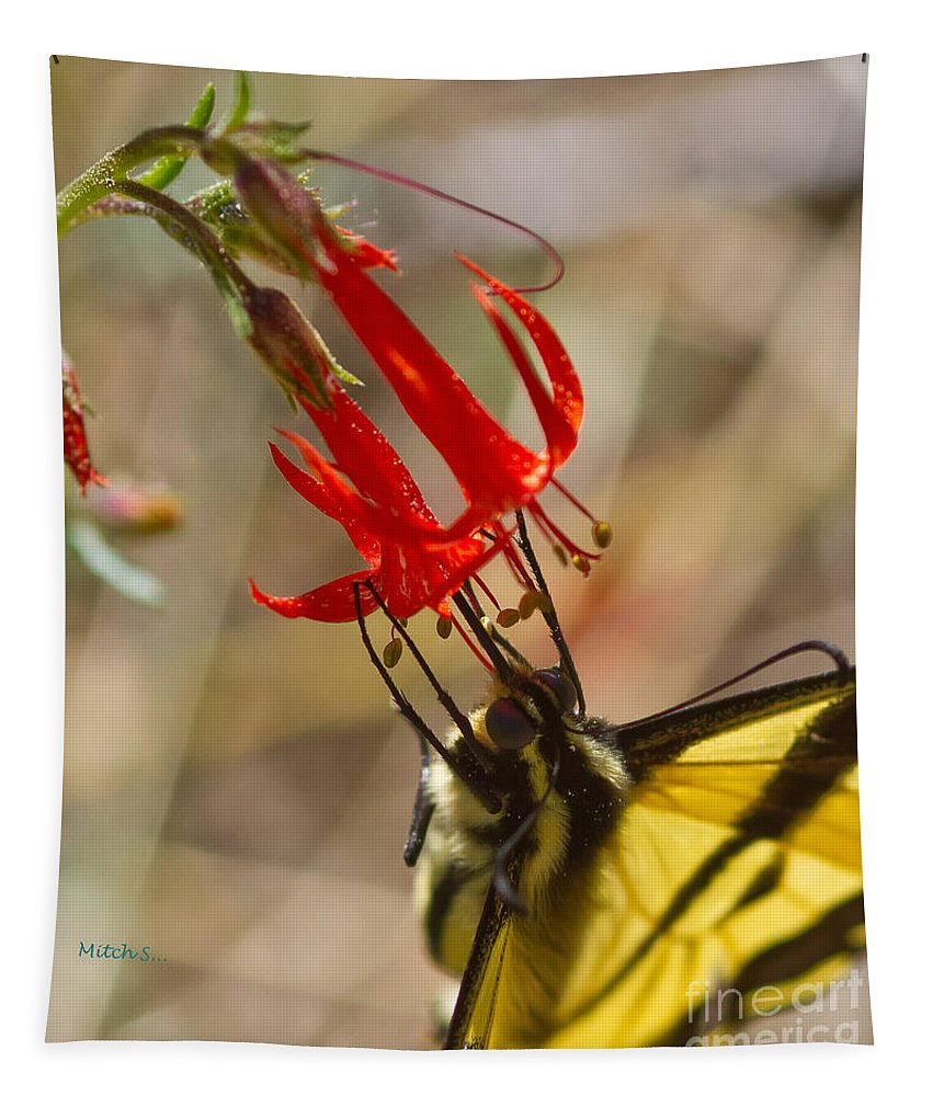 Swallowtail On Scarlet Gilia Tapestry featuring the photograph Swallowtail On Scarlet Gilia by Mitch Shindelbower