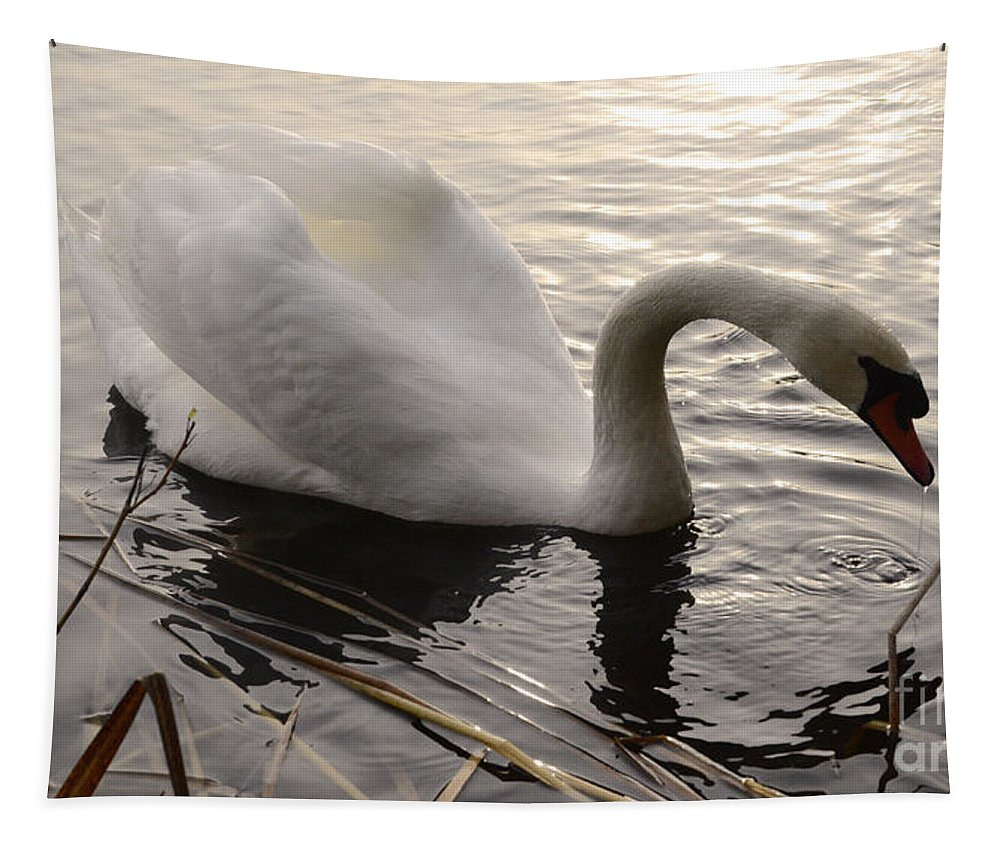 Swan Tapestry featuring the photograph Swan Along The Shore by Bob Christopher