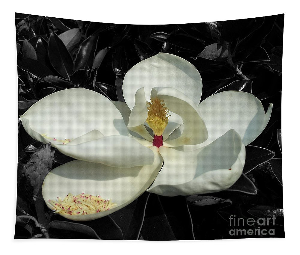 Magnolia Tapestry featuring the photograph Sweet Magnolia by Paul Wilford