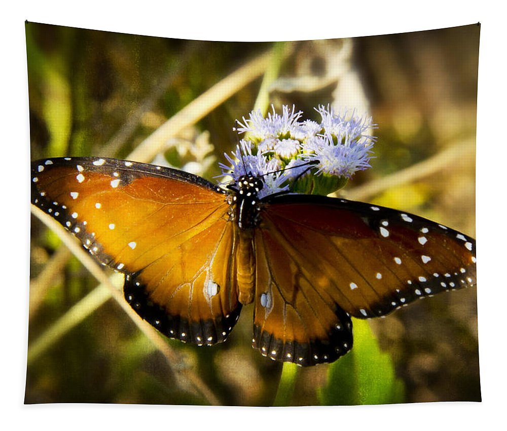 Queen Butterfly Tapestry featuring the photograph The Beauty Of The Queen by Saija Lehtonen