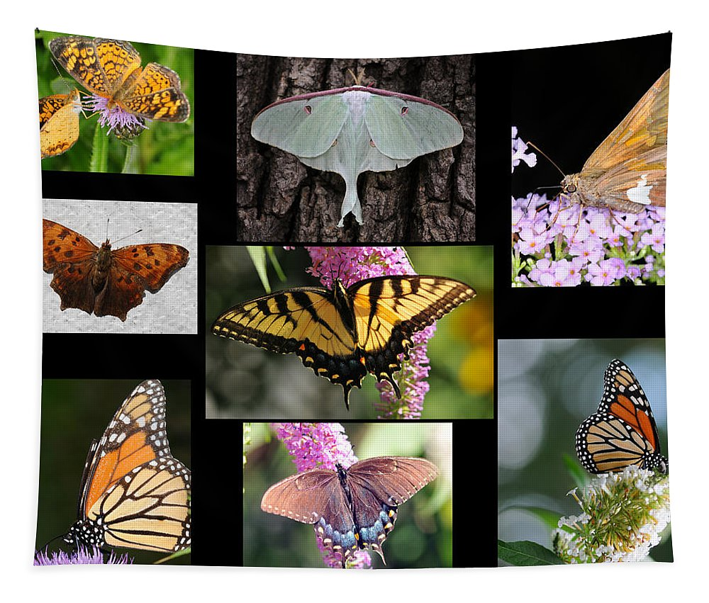 Butterfly Tapestry featuring the photograph The Butterfly Collection by Paul Ward