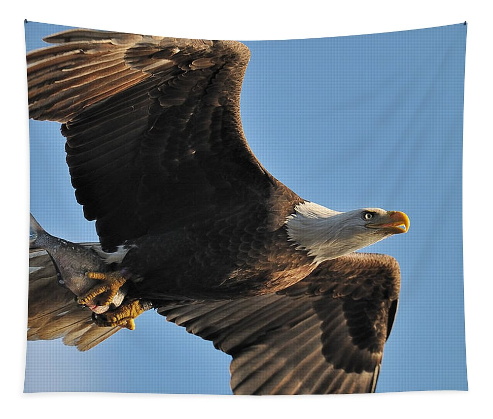 Bald Eagle Tapestry featuring the photograph The Catch by Craig Leaper