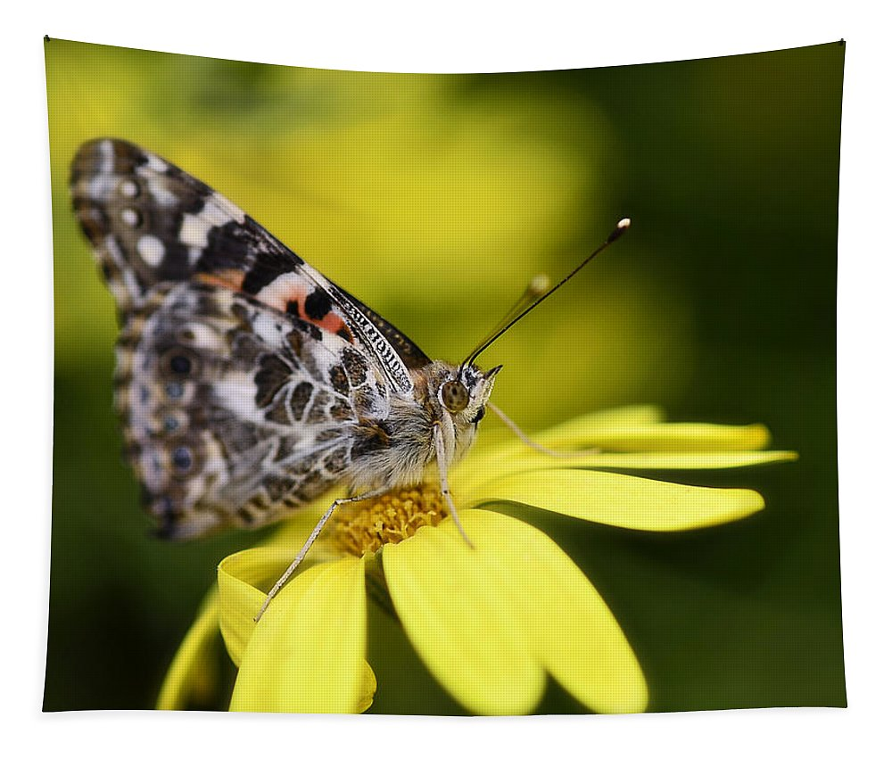 Painted Lady Butterfly Tapestry featuring the photograph The Painted Lady And The Daisy by Saija Lehtonen