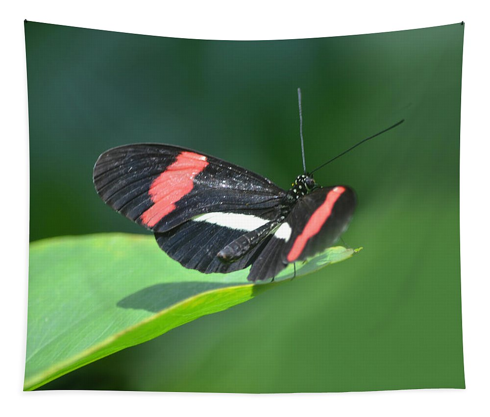 Postman Tapestry featuring the photograph The Postman Takes Flight by Sandi OReilly