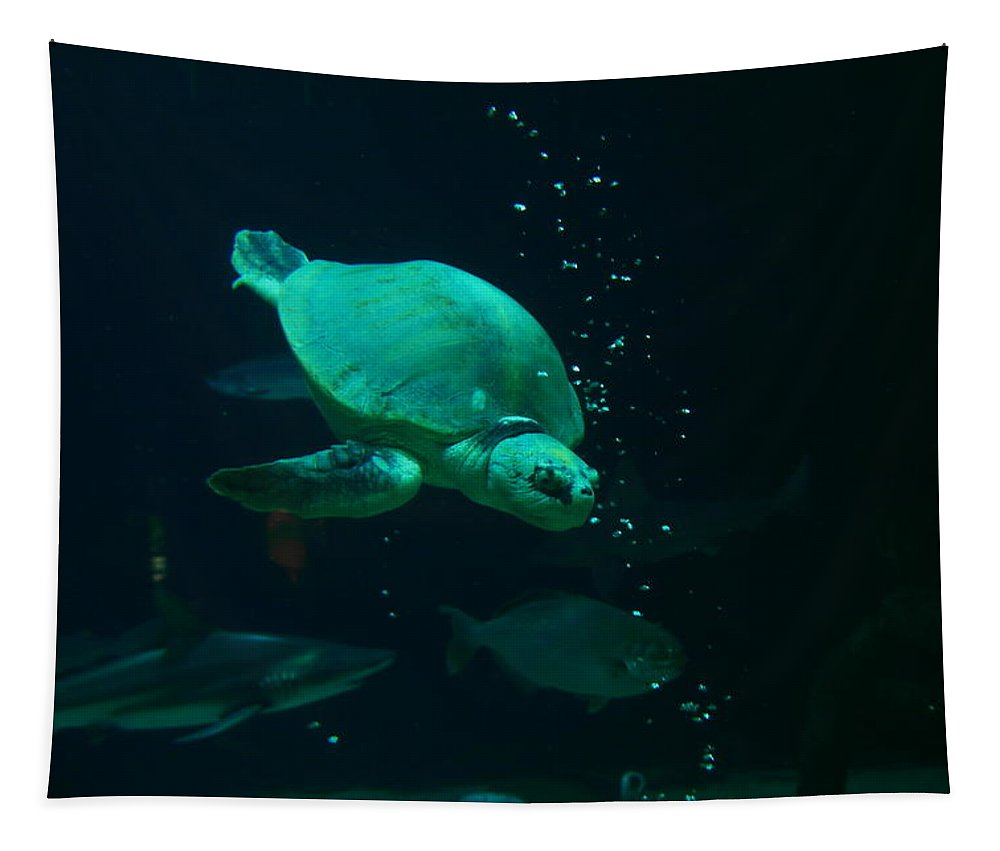 Turtles Tapestry featuring the photograph The Sea Turtle Dives by Jeff Swan
