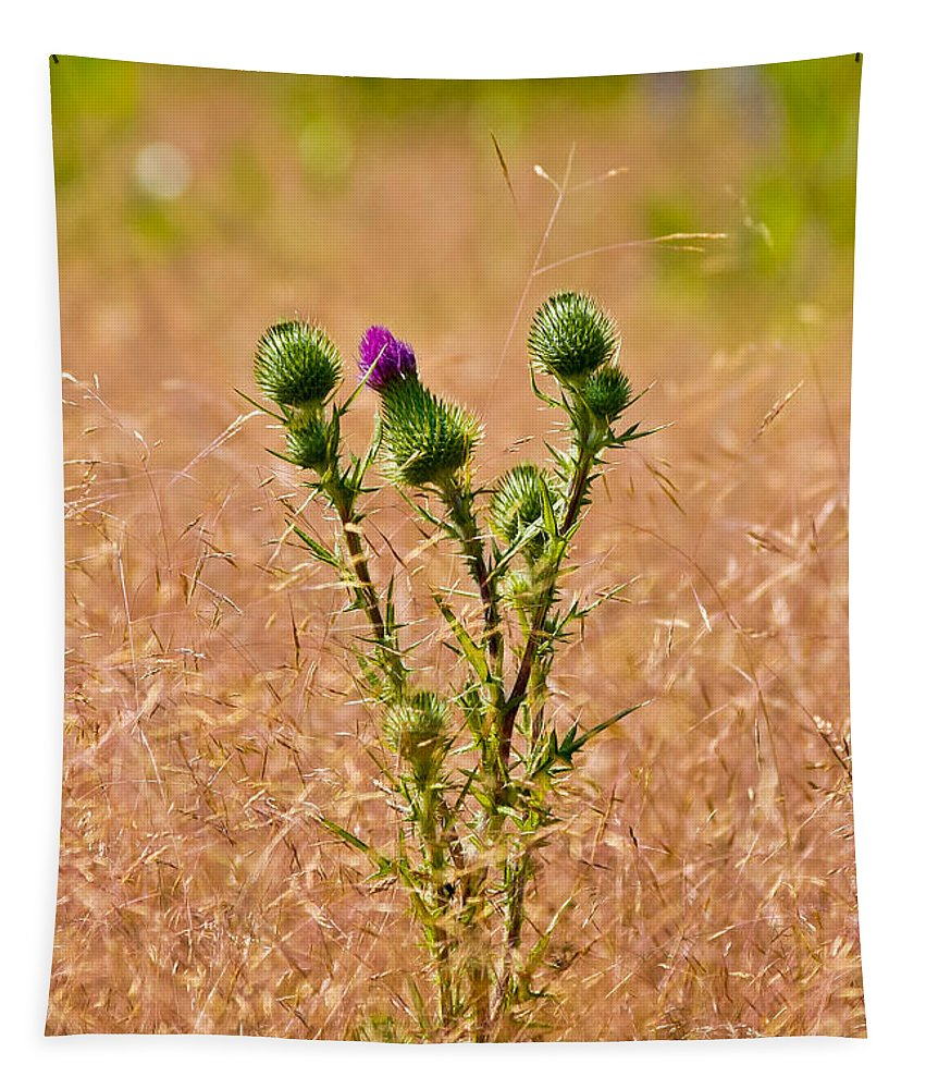 Thistle Tapestry featuring the photograph Thistle by Mitch Shindelbower