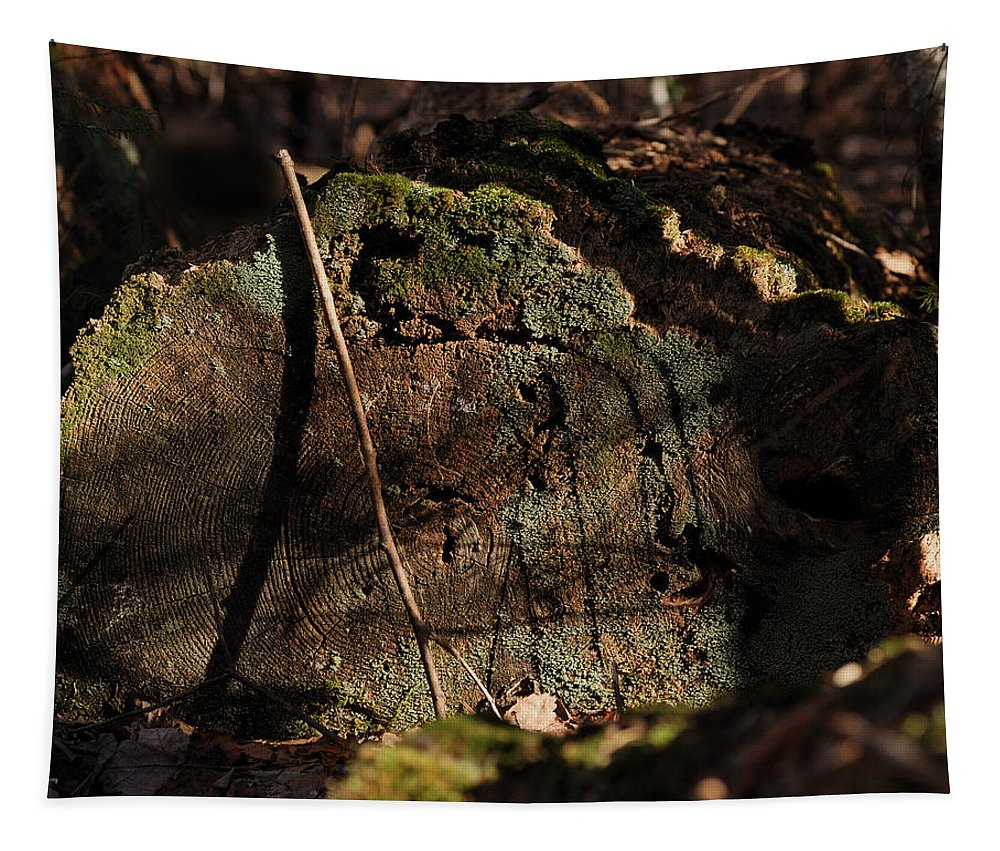 Log Tapestry featuring the photograph Time by Susan Capuano