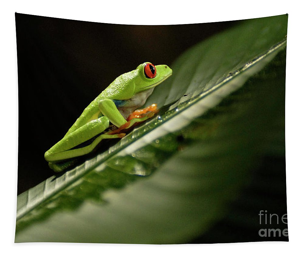 Frog Tapestry featuring the photograph Tree Frog 2 by Bob Christopher