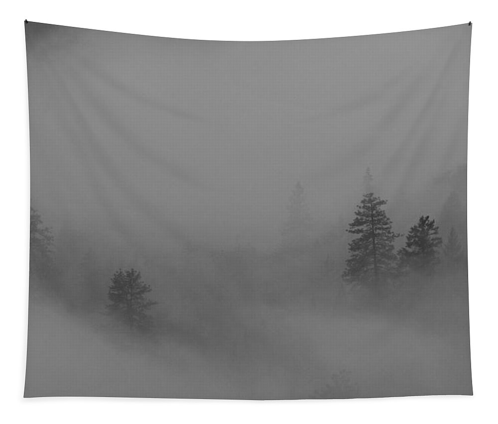 Trees Tapestry featuring the photograph Trees In Fog by Mick Anderson