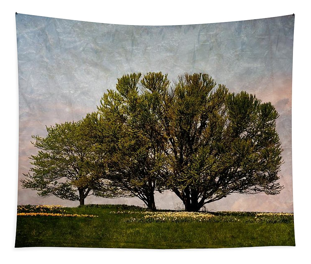 Tree Tapestry featuring the photograph Trees Of Life by Trish Tritz