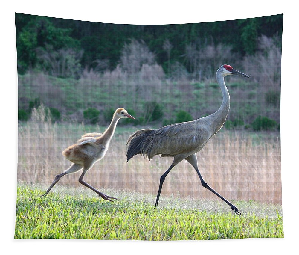 Bird Tapestry featuring the photograph Trying To Keep Up by Carol Groenen