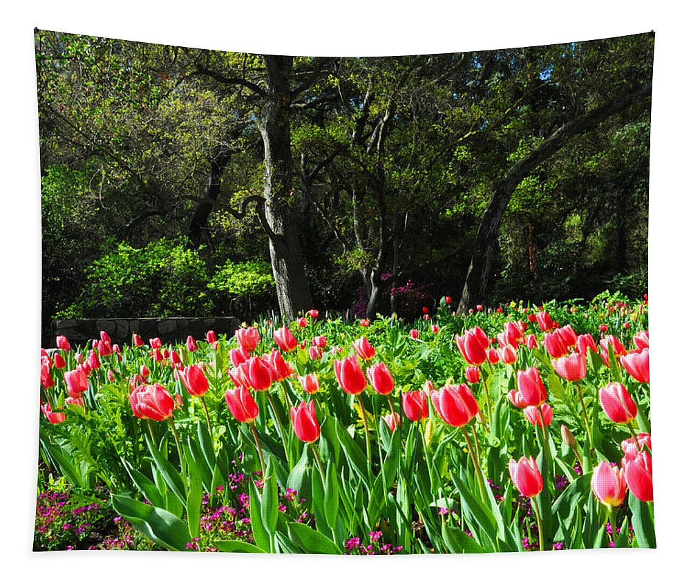 Tulip Tapestry featuring the photograph Tulips And Woods by Lynn Bauer
