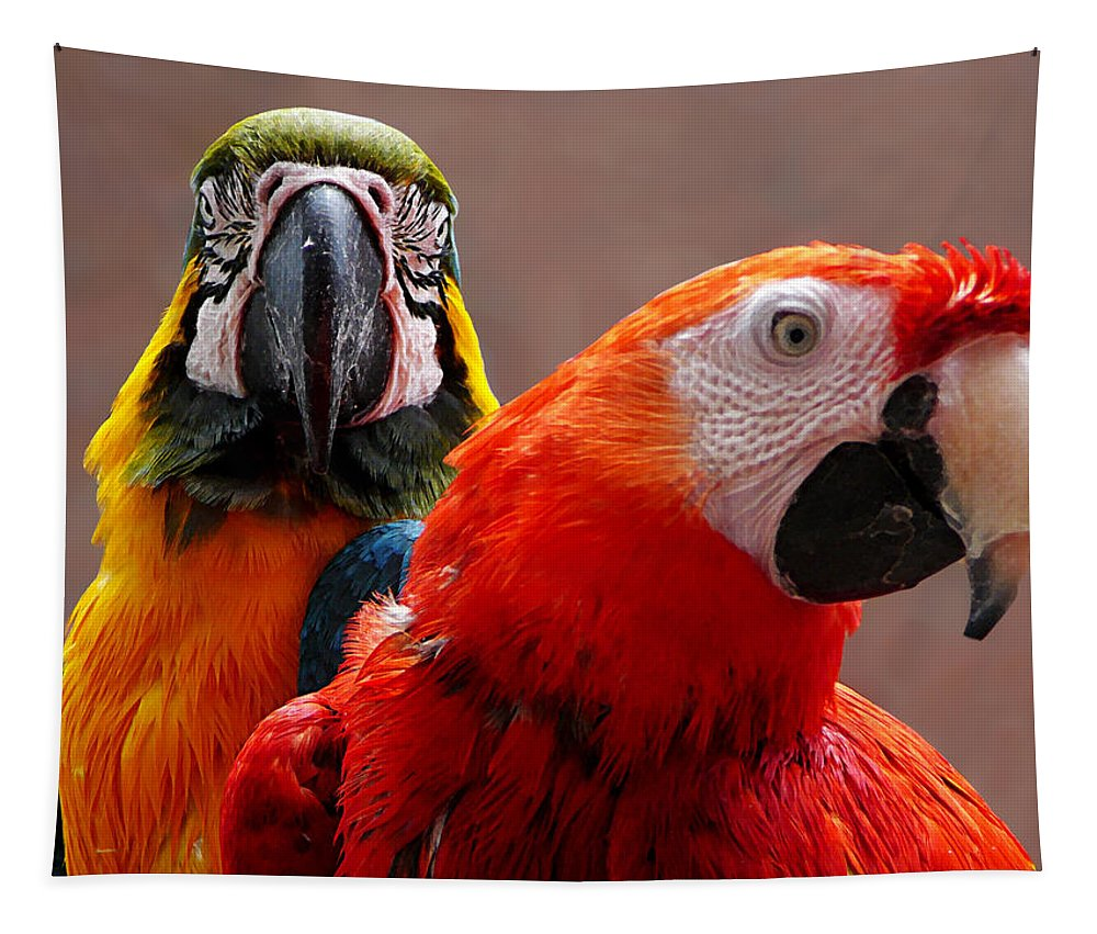 Birds Tapestry featuring the photograph Two Parrots Closeup by Susan Savad