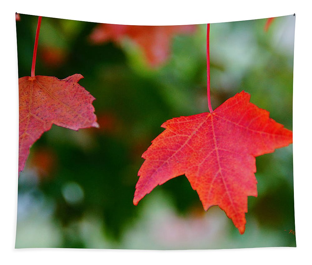 Two Tapestry featuring the photograph Two Red Maple Leaves by Mick Anderson