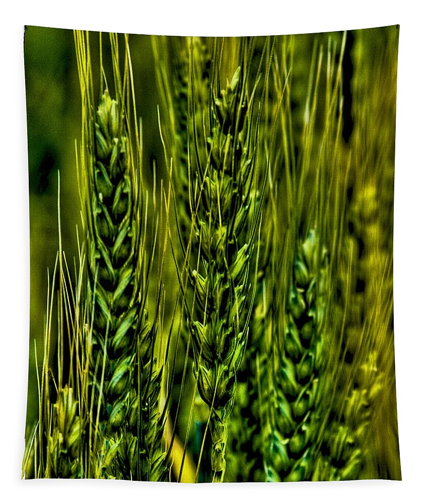 Wheat Tapestry featuring the photograph Unripened Wheat by David Patterson