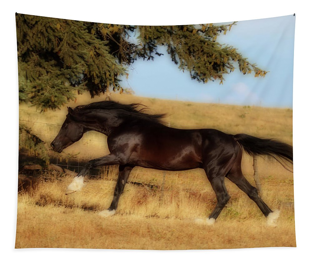 Uphilll Gallop Tapestry featuring the photograph Uphilll Gallop by Wes and Dotty Weber
