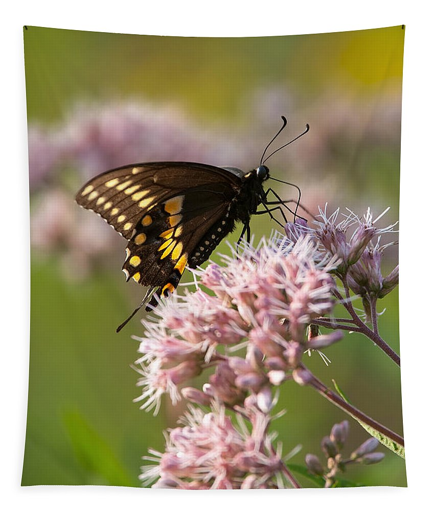 Butterfly Tapestry featuring the photograph Victuals by Dale Kincaid