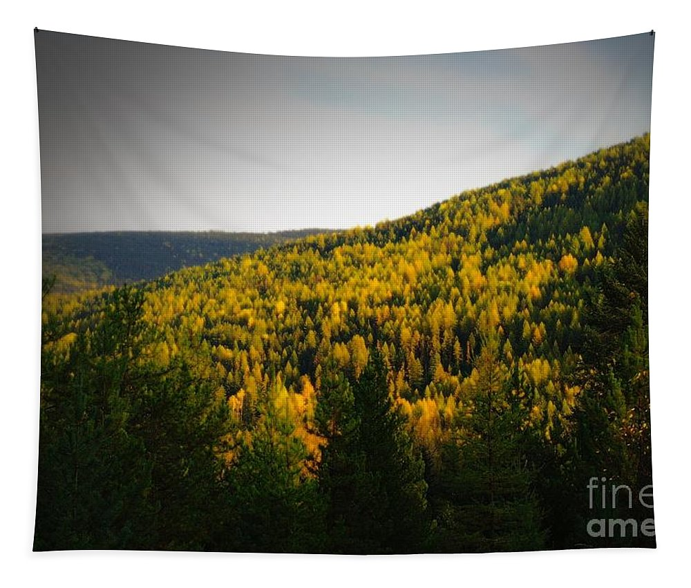 Autumn Tapestry featuring the photograph Vignette Of Autumn Gold by Jeff Swan