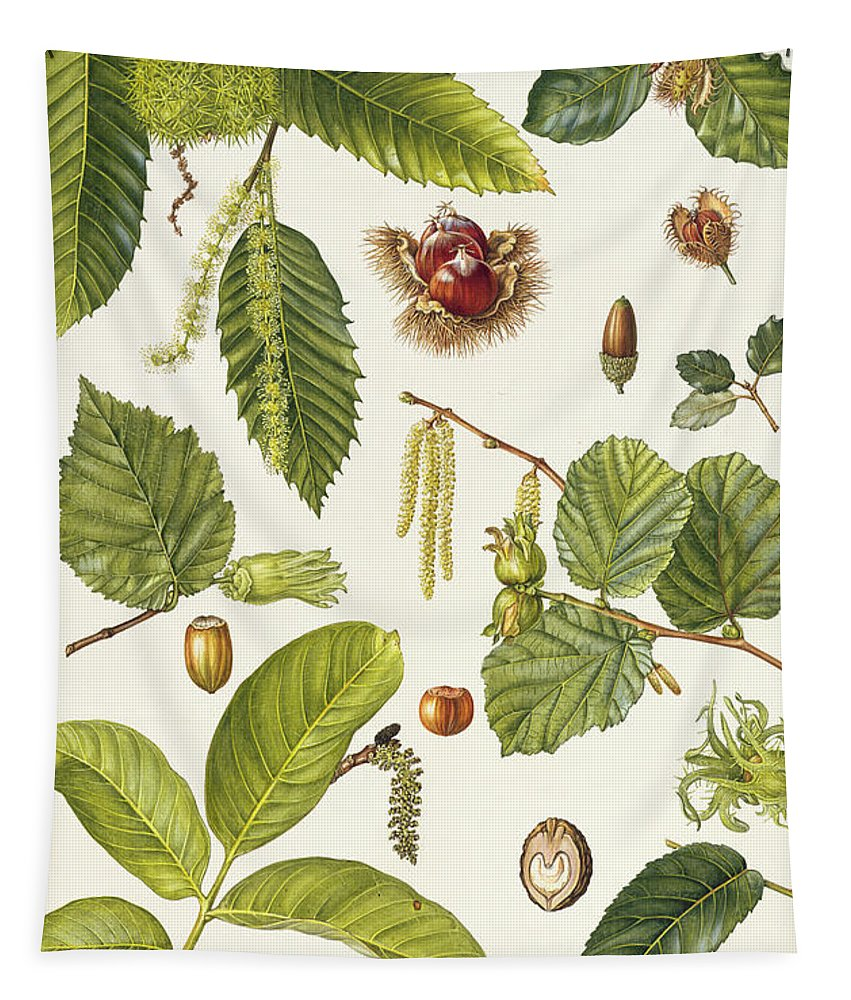 Sweet Chestnut; Beech; Cork Oak; Filbert; Hazel; Catkin; Husk; Acorn; Leaves; Botanical; Nuts Tapestry featuring the painting Walnut And Other Nut-bearing Trees by Elizabeth Rice