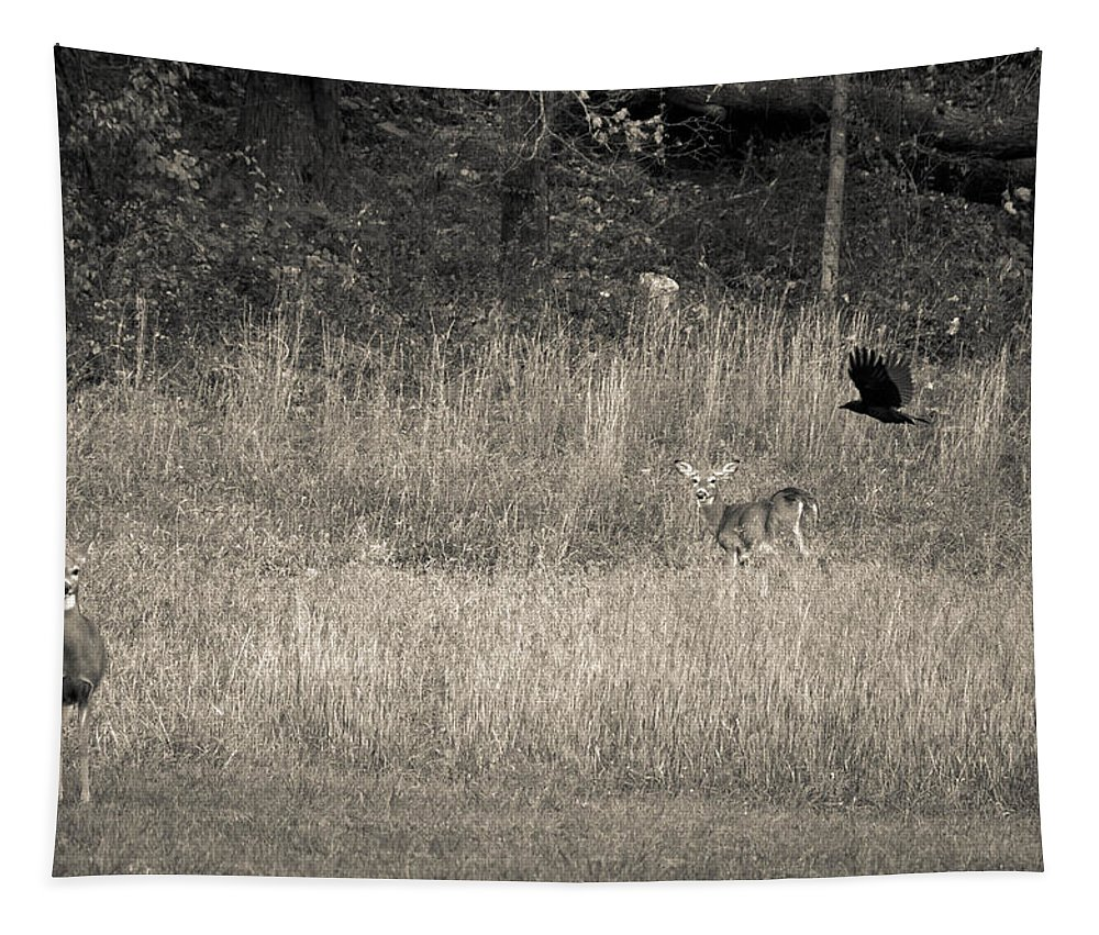 Deer Tapestry featuring the photograph Warwick Furnace by Trish Tritz