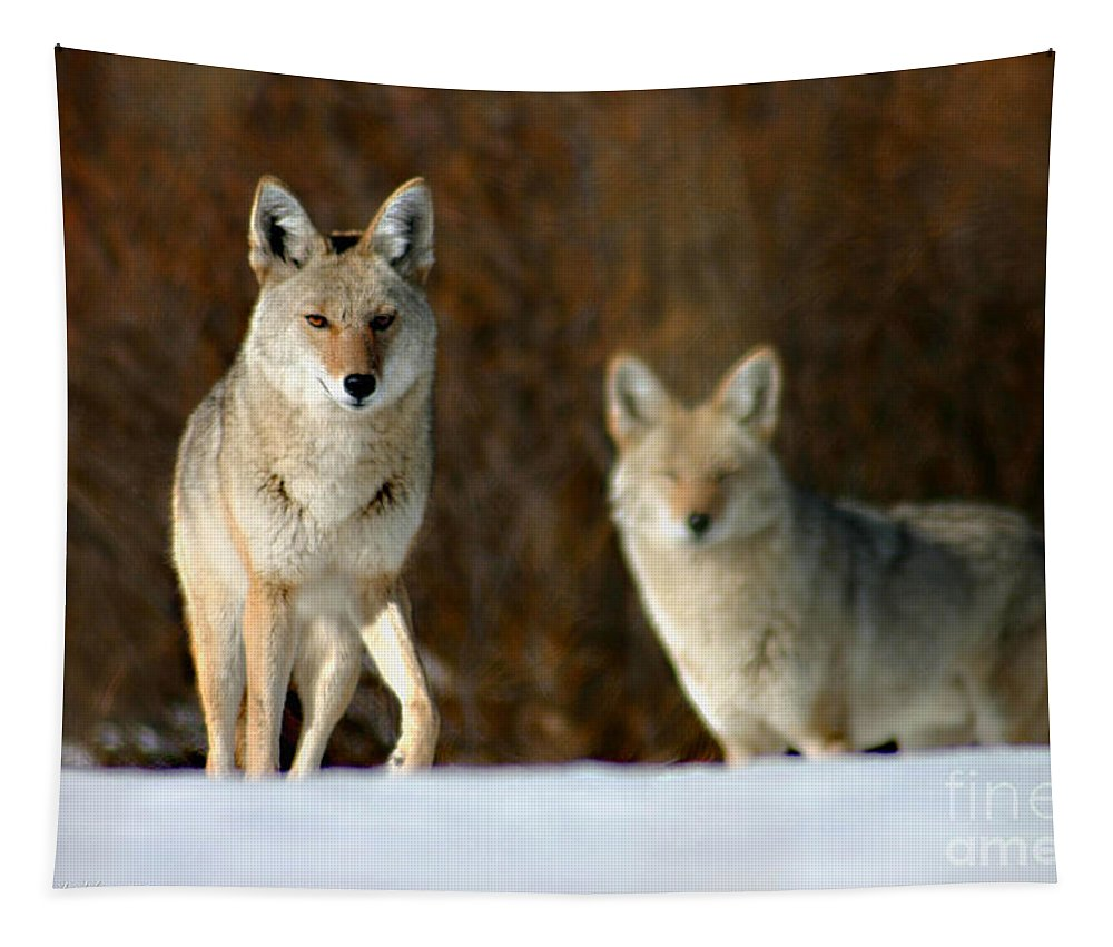 Coyotes Tapestry featuring the photograph Watching by Mitch Shindelbower