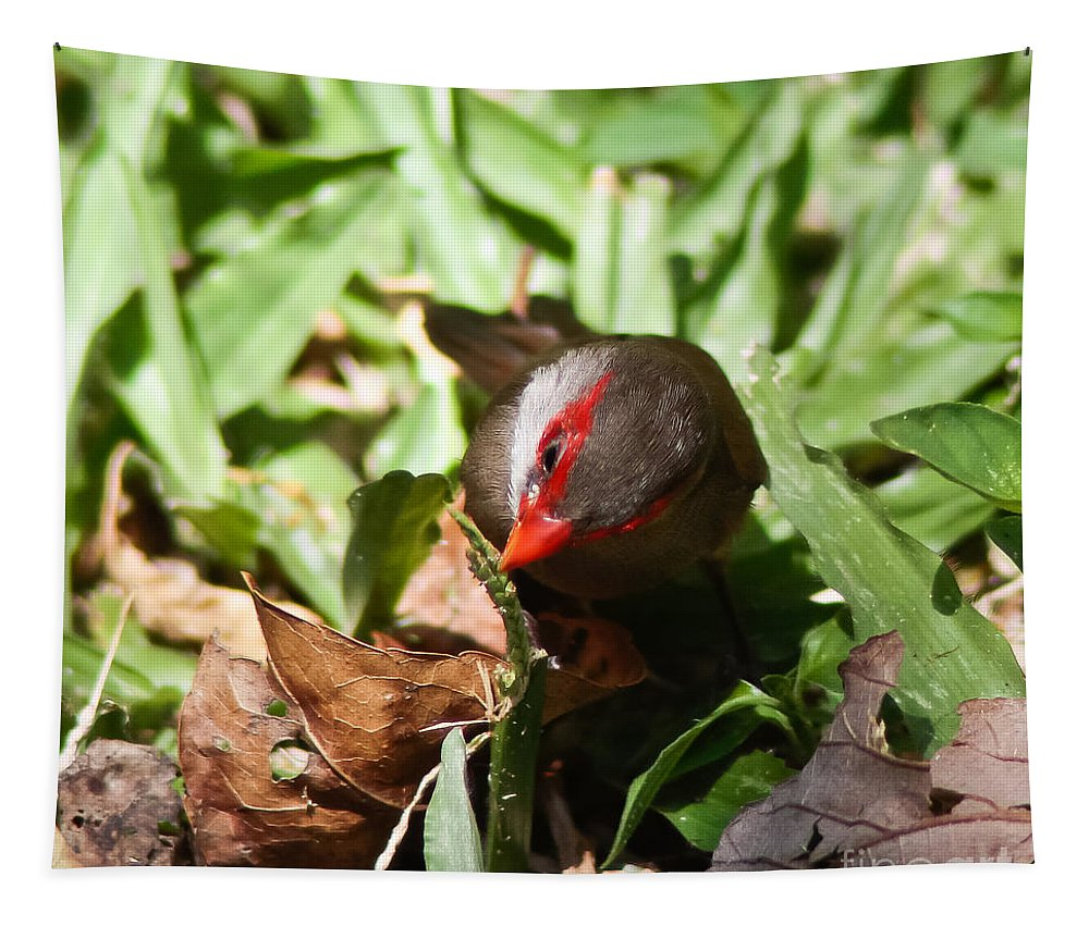 Waxbill Tapestry featuring the photograph Waxbill by Mitch Shindelbower
