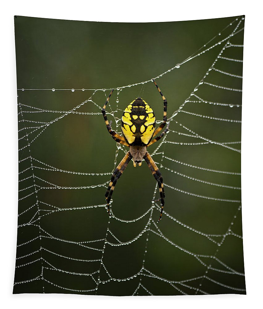 Spider Tapestry featuring the photograph Weave Master by Susan Capuano