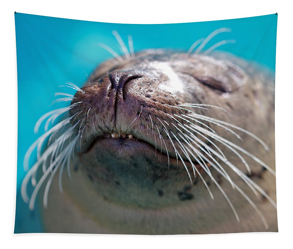 Whiskers Tapestry featuring the photograph Whiskers Of A Seal by Karol Livote