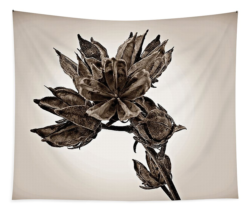 Rose Of Sharon Tapestry featuring the photograph Winter Dormant Rose Of Sharon - S by David Dehner