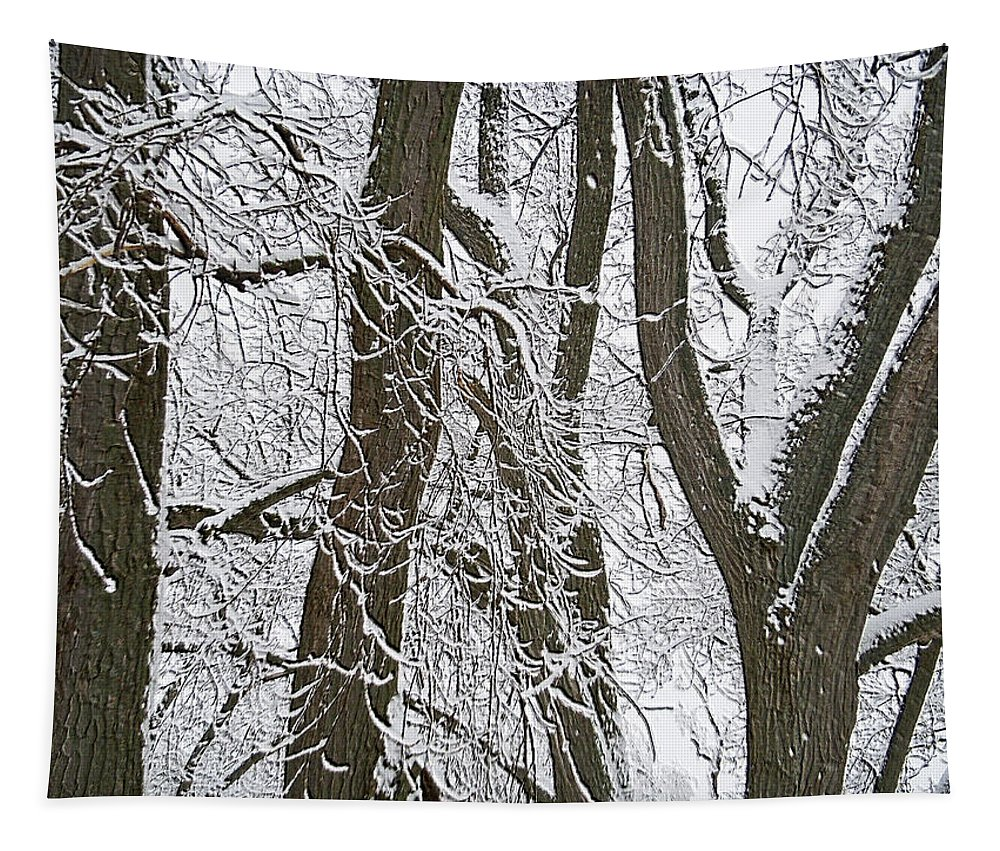 Landscape Tapestry featuring the photograph Winter Trees by Aimee L Maher ALM GALLERY