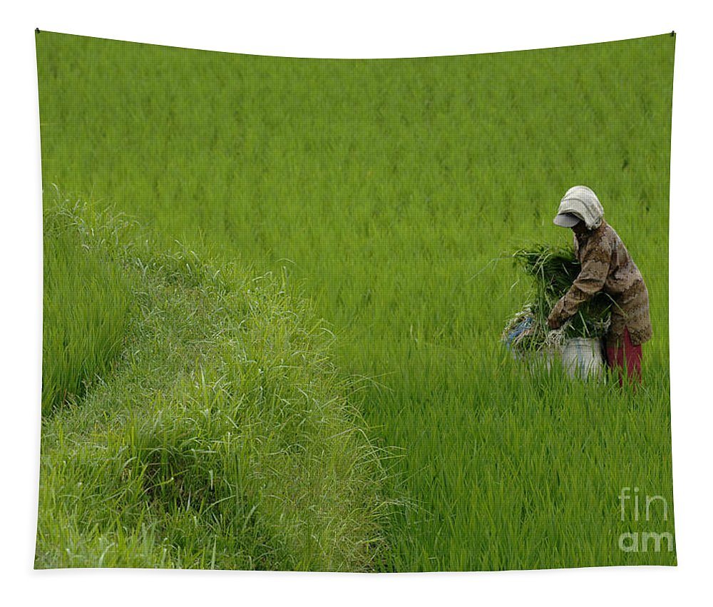 Rice Tapestry featuring the photograph Working The Fields by Bob Christopher