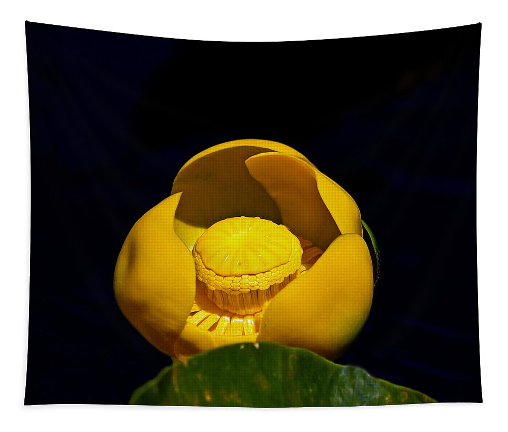 Yellow Lily Tapestry featuring the photograph Yellow Lily by Mitch Shindelbower