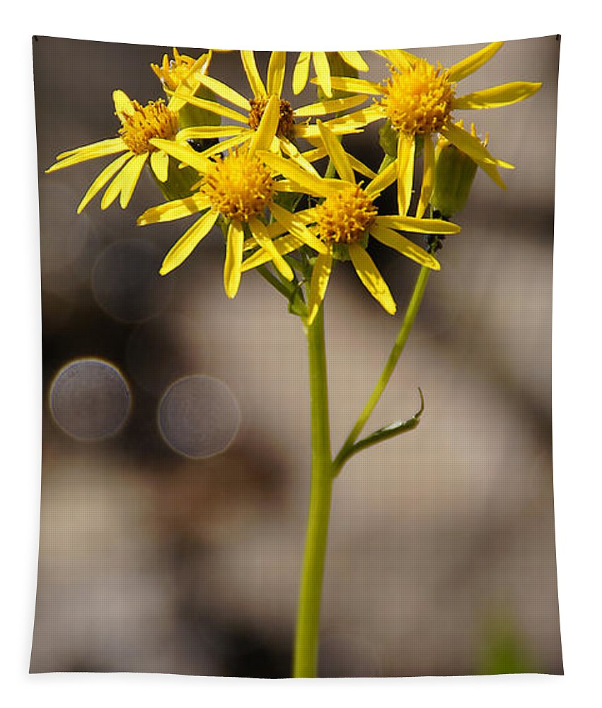 Yellow Tapestry featuring the photograph Yellow Wildflower At Crater Lake by Mick Anderson