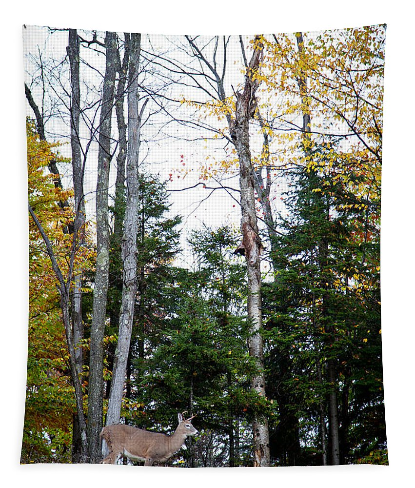 Adirondack's Tapestry featuring the photograph Young Buck In Autumn by David Patterson