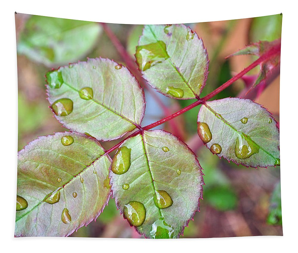 Rose Tapestry featuring the photograph Young Rose Leaves by Tikvah's Hope