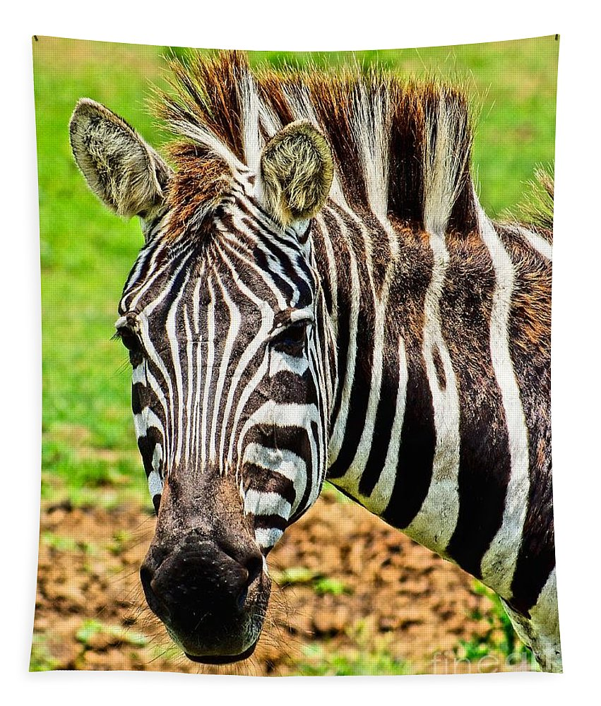 Africa Tapestry featuring the photograph Zebra by Nick Zelinsky