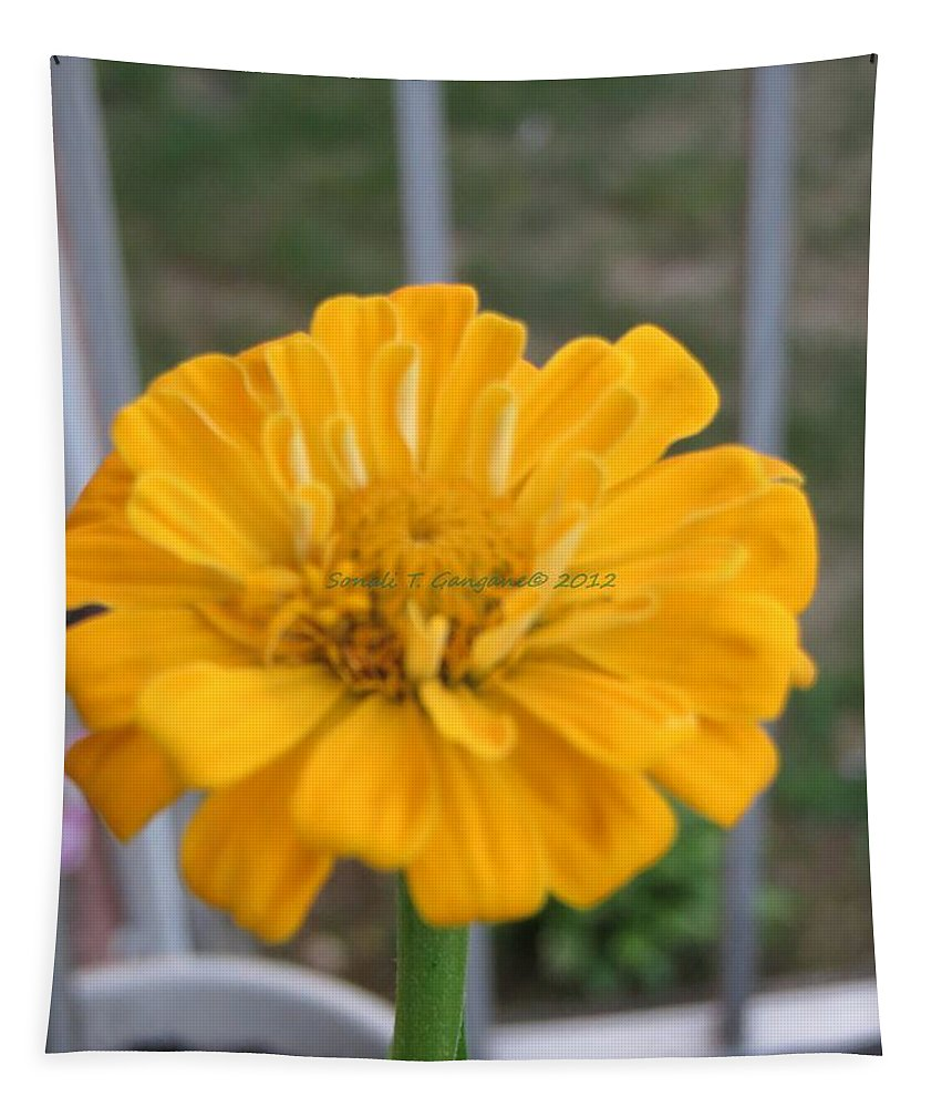 Amarillo Flower Tapestry featuring the photograph Zinnia Named After Zinn by Sonali Gangane