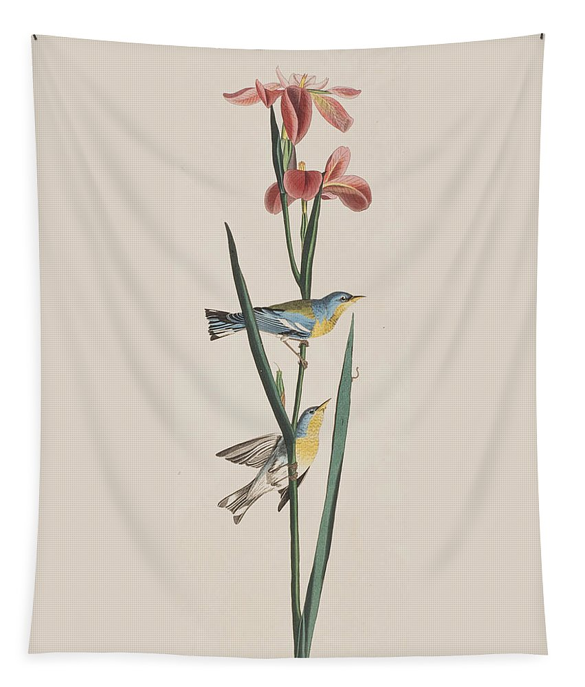 Warbler Tapestry featuring the painting Blue Yellow-backed Warbler by John James Audubon