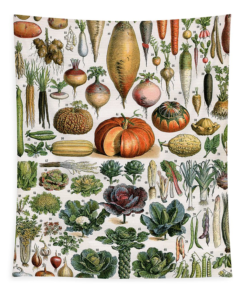 Fruit Tapestry featuring the painting Illustration Of Vegetable Varieties by Alillot