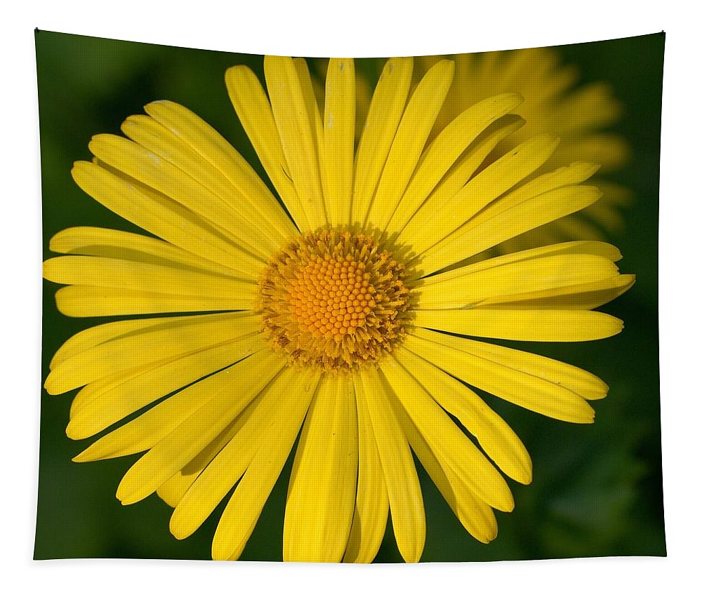 Doronicum Caucasicum Tapestry featuring the photograph Leopard's Bane by Jouko Lehto