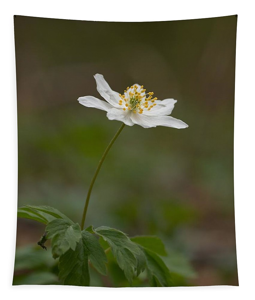 Lehtokukka Tapestry featuring the photograph Wood Anemone by Jouko Lehto